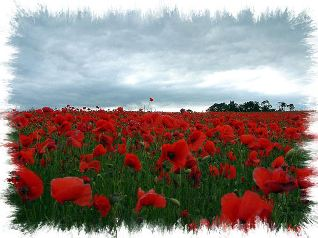 Blog. Poppy_field. 5.09