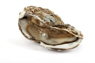 Blog. Oyster w. pearl. 3.13