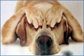 Pet-tips_-ez-vet-pet-clinic (1)