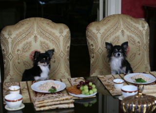 Blog. Waldorf=Astoria-Two-dogs-full-table. 8.19